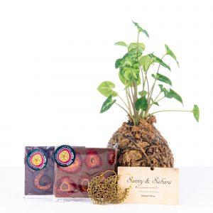 Plant hampers, Chocolate Hampers