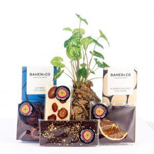 Plant Hamper, Chocolate Hamper